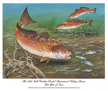 The red drum challenge 2008 for Nc saltwater fish